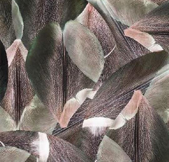 Vinylové podlahy Forbo Flotex vision floral 001587 Tulip Field Red