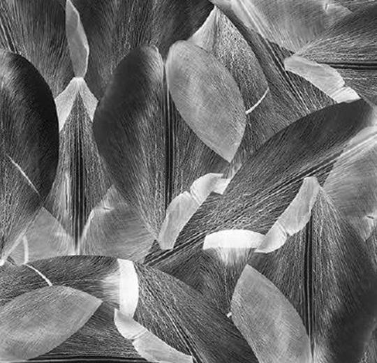 Vinylové podlahy Forbo Flotex vision floral 001588 Tulip Field Grey